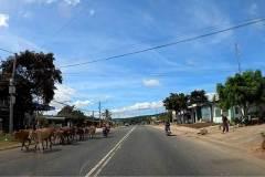 anim-on-road-0-04-20